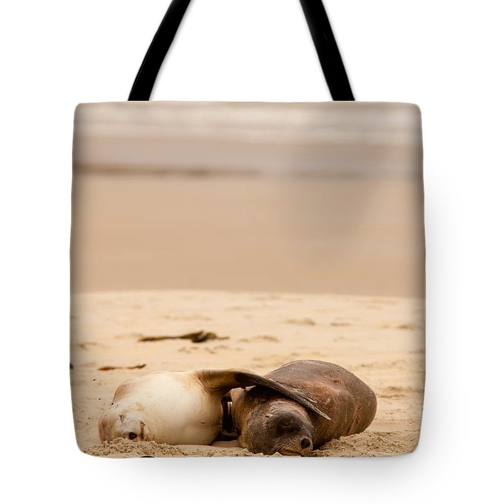 South Island Tote Bag featuring the photograph Mating Hookers Sealions Taking A Nap On Beach by Stephan Pietzko