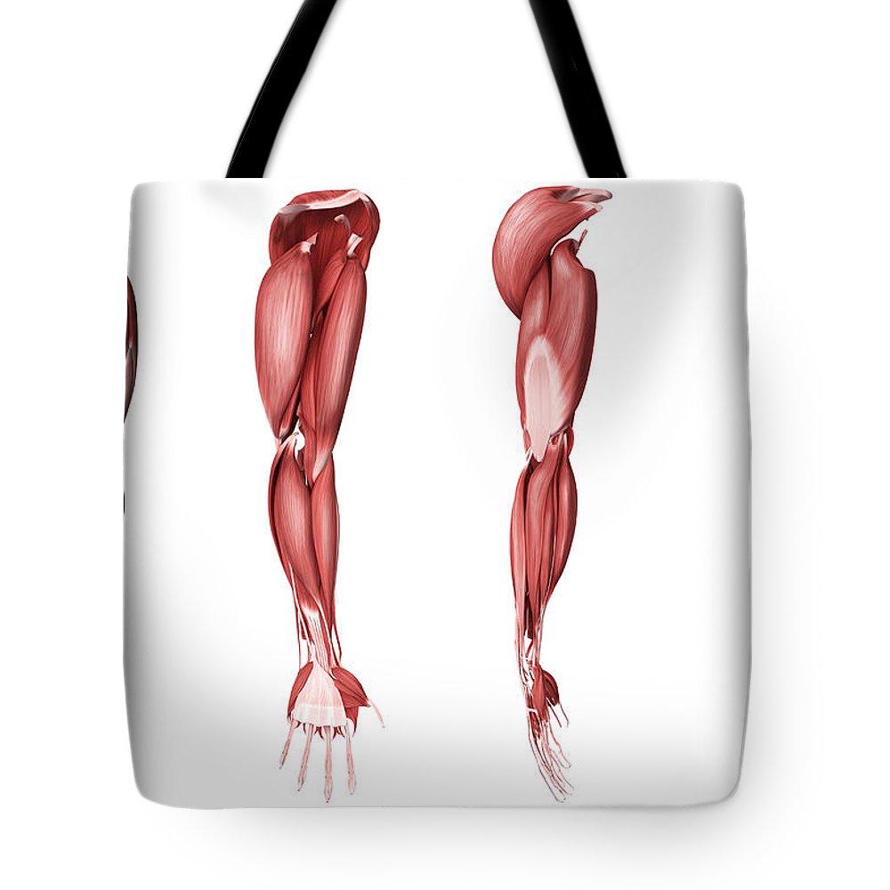 Flexor Digitorum Longus Tote Bags | Fine Art America