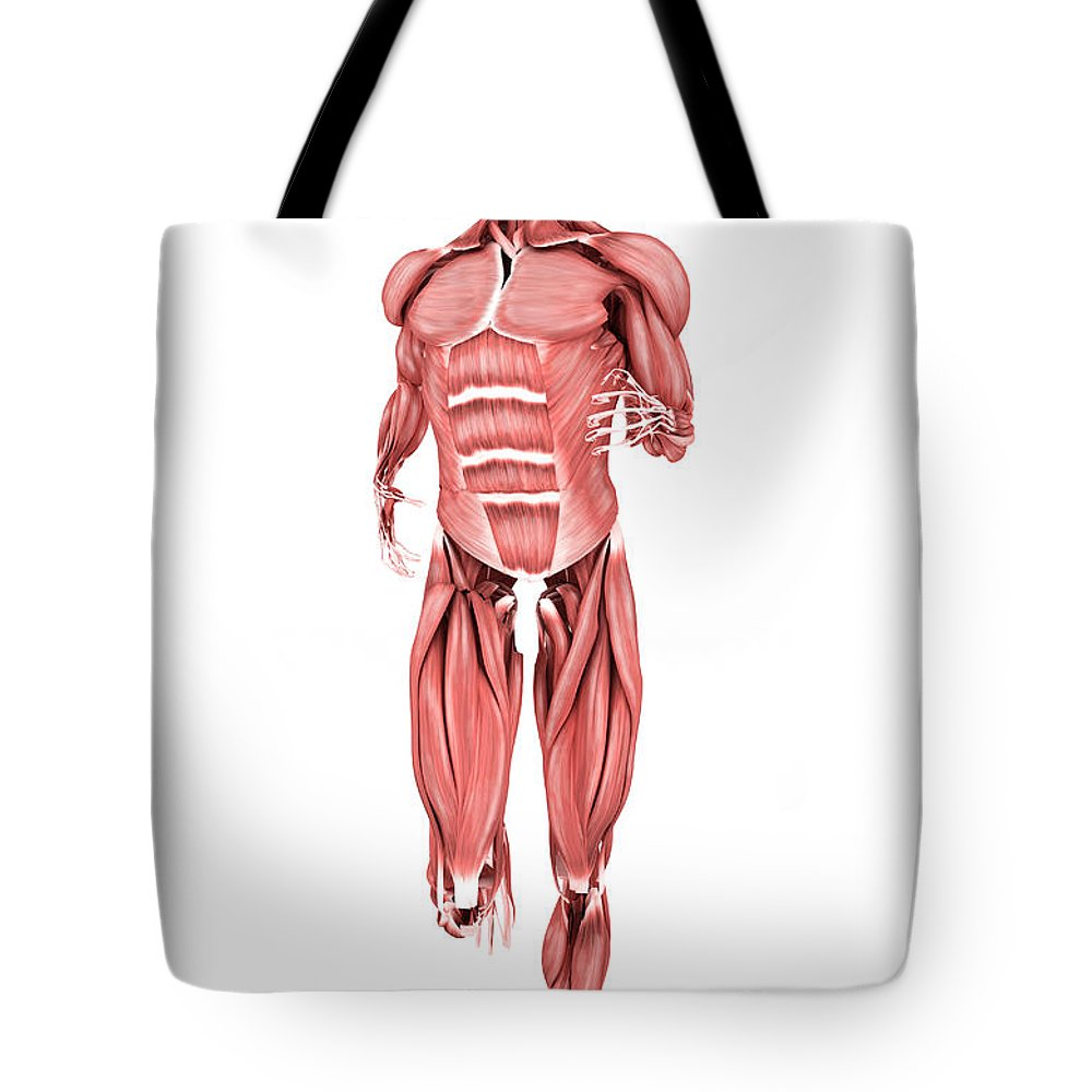 Motion Tote Bag featuring the digital art Medical Illustration Of Male Muscles by Stocktrek Images