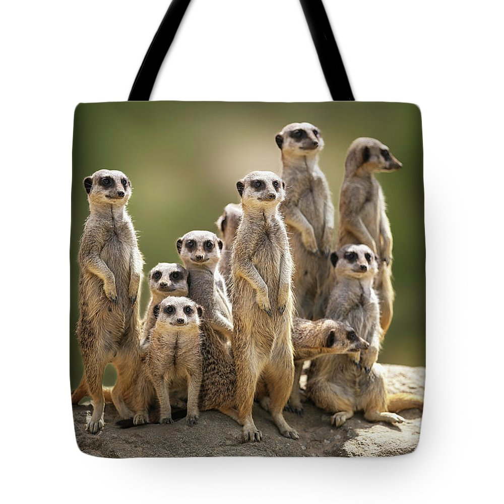Scenics Tote Bag featuring the photograph Meerkat Family On Lookout by Kristianbell
