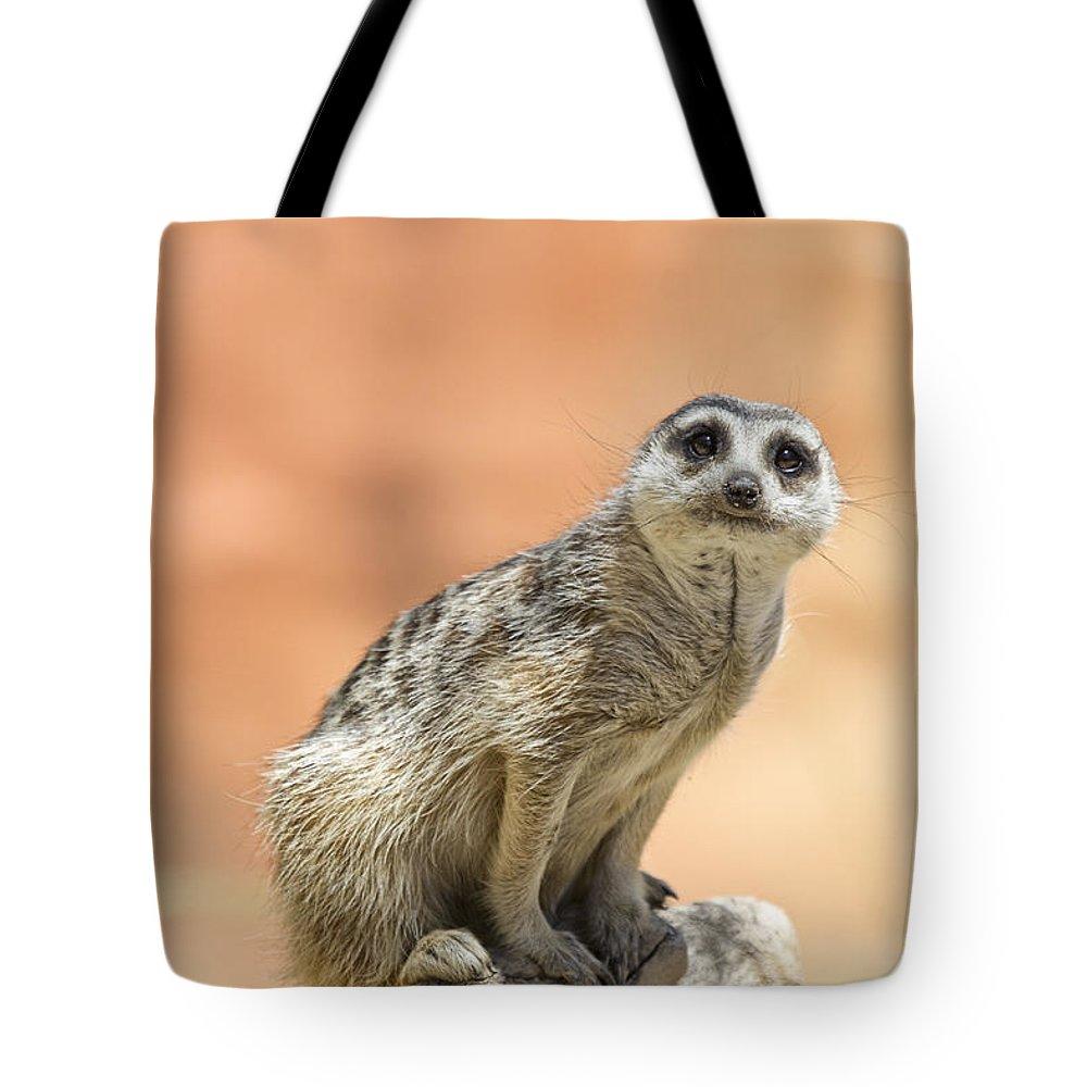 Meerkat Tote Bag featuring the photograph Meerkat Manor V3 by Douglas Barnard