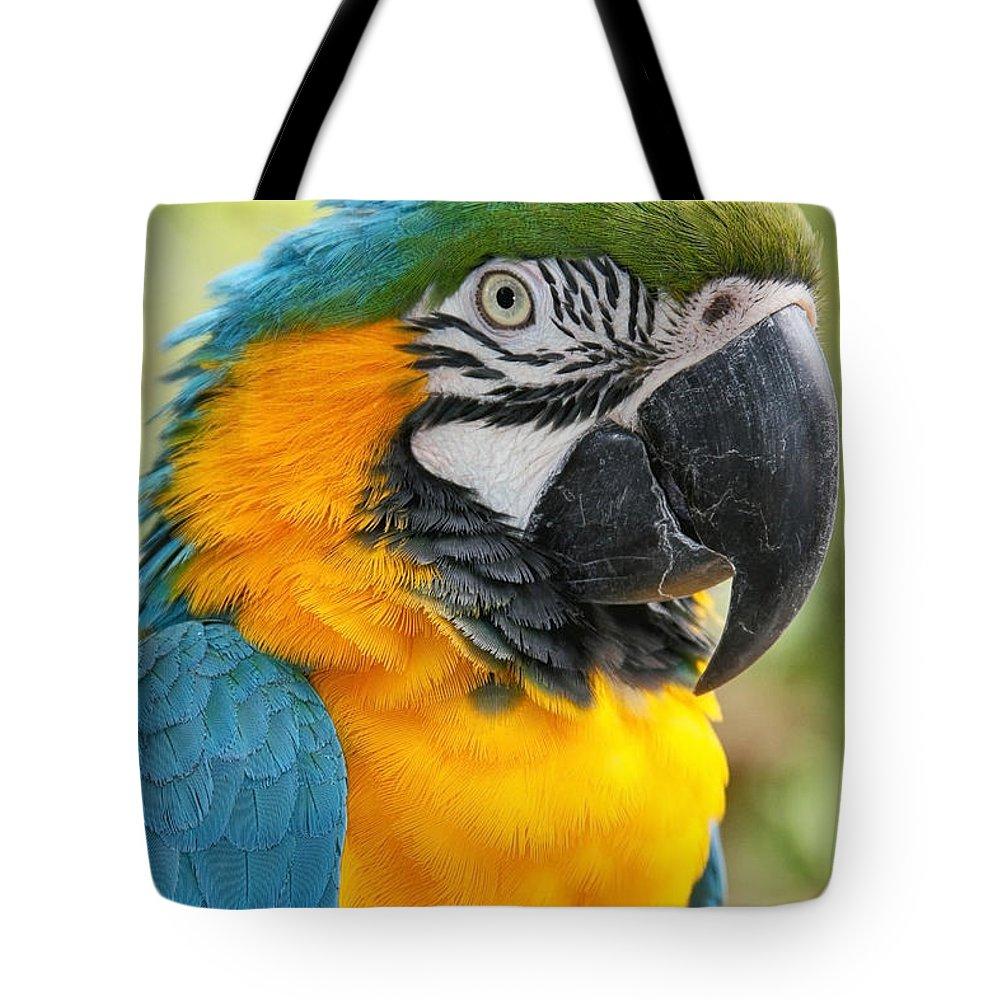 Aloha Tote Bag featuring the photograph Mele E Manono Ia Ea Macao Tropical Birds Of Hawaii by Sharon Mau
