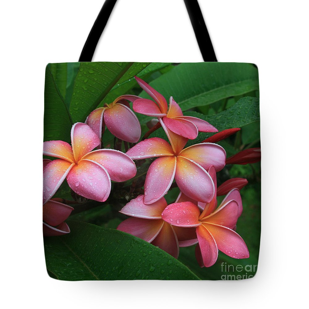 Pink Plumeria Tote Bag featuring the photograph Melia Hae Hawaii Pink Tropical Plumeria Keanae by Sharon Mau
