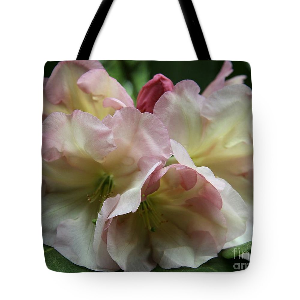 Rhododendron Tote Bag featuring the photograph Mellow Pink by Christiane Schulze Art And Photography