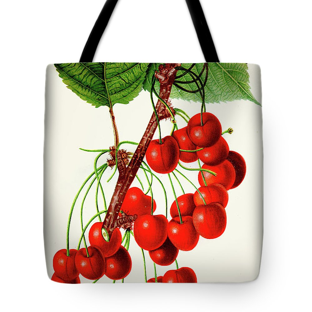 Engraving Tote Bag featuring the digital art Mercer Cherry Illustration 1892 by Thepalmer