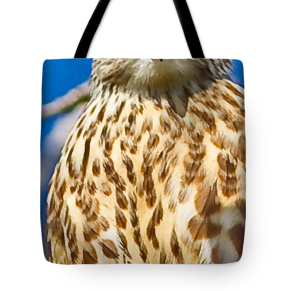 Falcon Tote Bag featuring the photograph Merlin Falcon by Brian Williamson