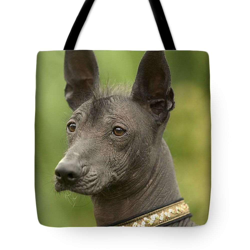 Mexican Hairless Tote Bag featuring the photograph Mexican Hairless Dog by Jean-Michel Labat