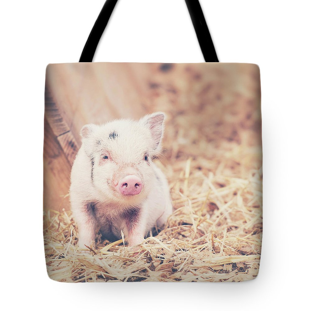 Pig Tote Bag featuring the photograph Micro Pig by Samantha Nicol Art Photography