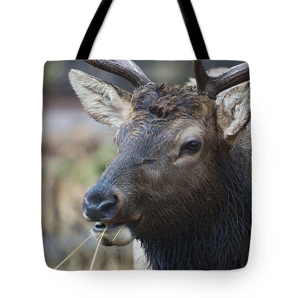 Cervus Canadensis Tote Bag featuring the photograph Mid-day Munch by J L Woody Wooden