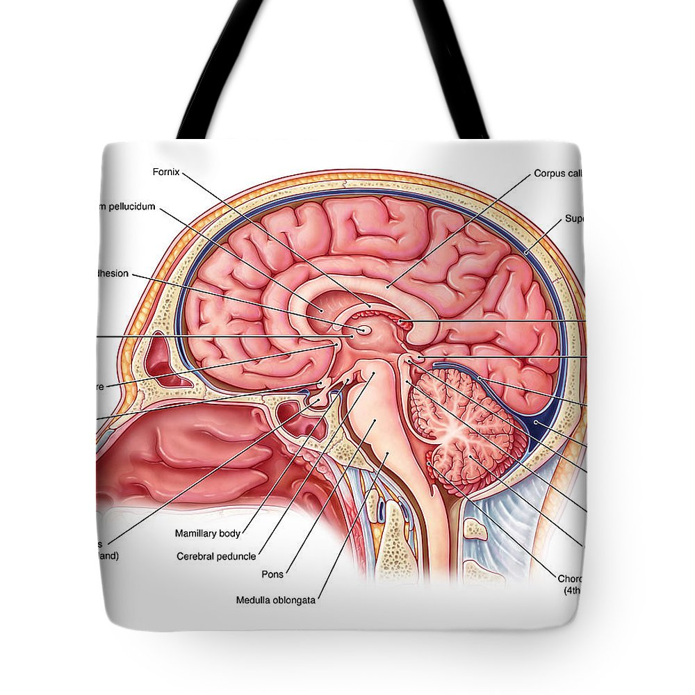 Midsagittal Brain, Illustration Tote Bag for Sale by Evan Oto