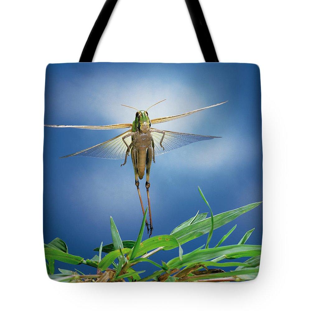 Np Tote Bag featuring the photograph Migratory Locust Flying by Satoshi Kuribayashi