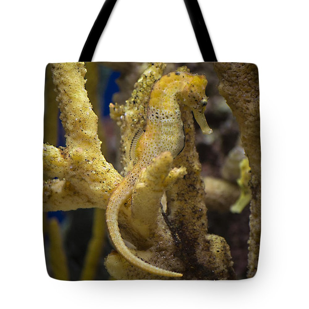 Seahorse Tote Bag featuring the photograph Mimic Seahorse by Diego Re