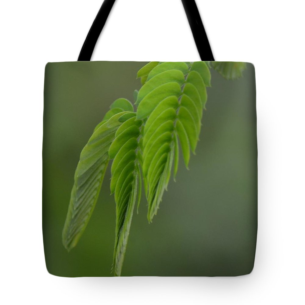 Mimosa Fronds In Spring Tote Bag featuring the photograph Mimosa Fronds In Spring by Maria Urso