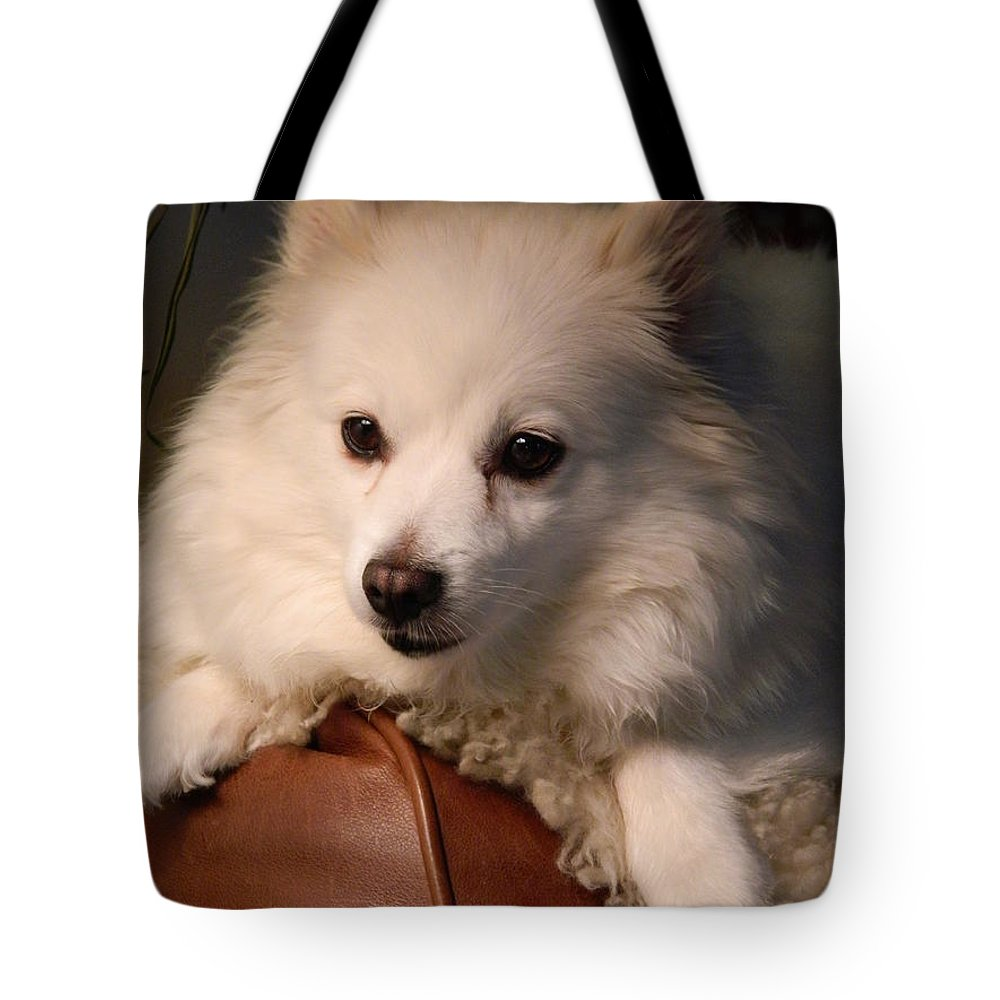 Dog Tote Bag featuring the photograph Miniature American Eskimo Lounging  by Nicki Bennett
