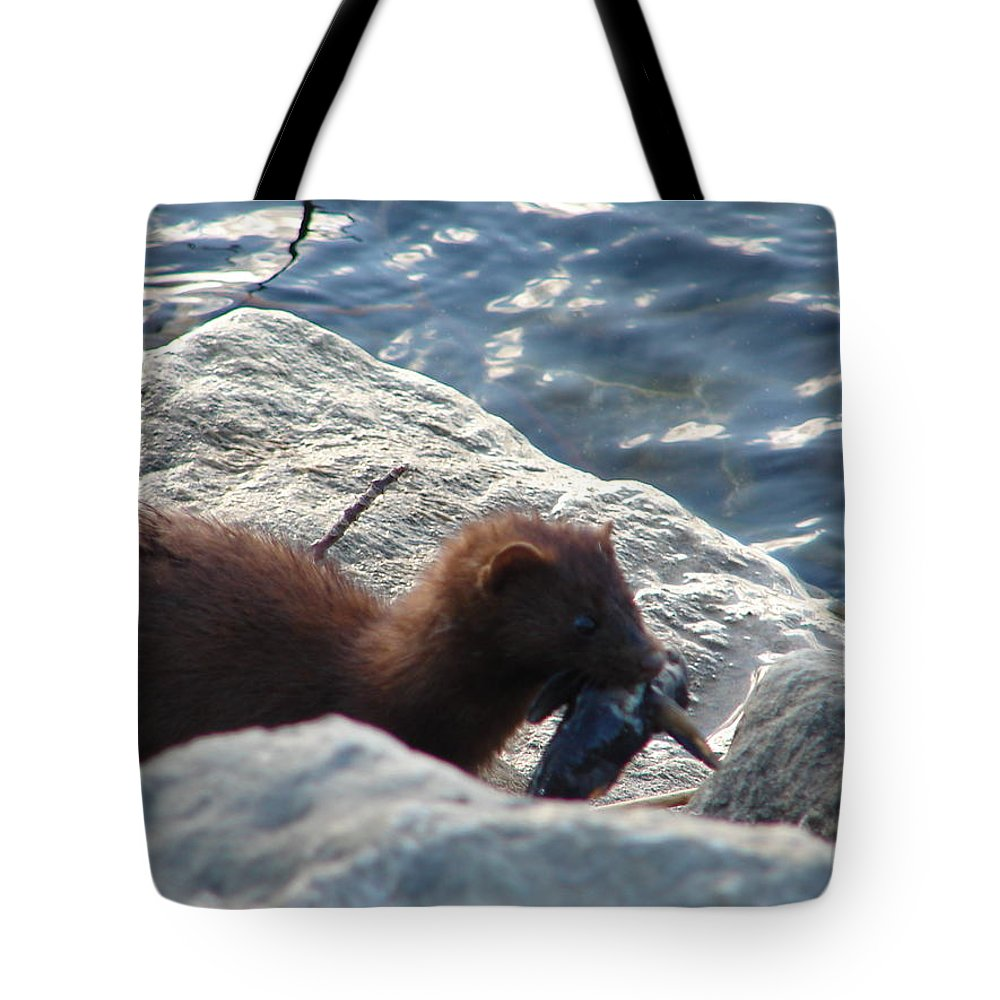 American Mink Tote Bag featuring the photograph Mink with a Round Goby by Randy J Heath