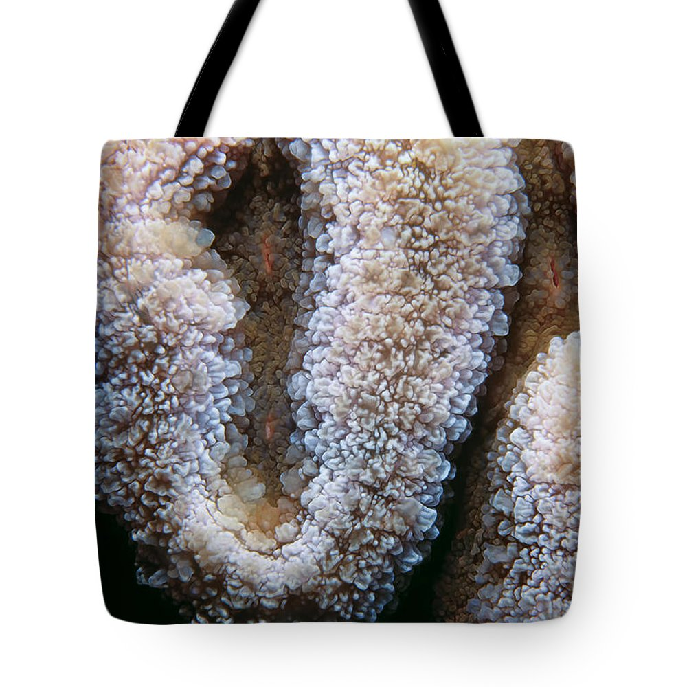 Micronesia Tote Bag featuring the photograph Miscellaneous 4 by Dawn Eshelman