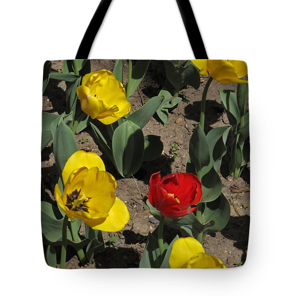 Tulipa Gesneriana Tote Bag featuring the photograph Misplaced Tulip  #0934 by J L Woody Wooden
