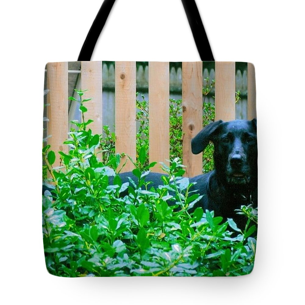 Dog Tote Bag featuring the photograph Miss You Riley by Laura Lee Zanghetti