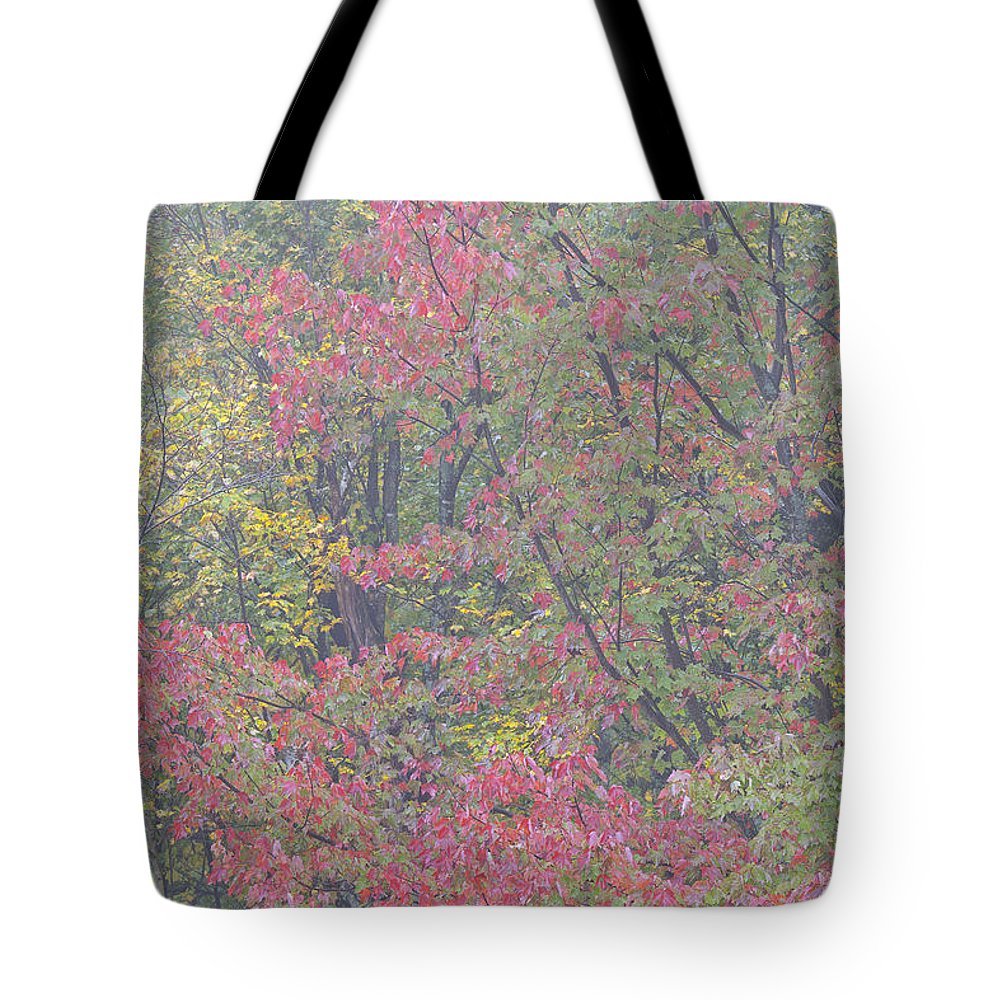 Fall Tote Bag featuring the photograph Misty Morning Foliage by Alan L Graham