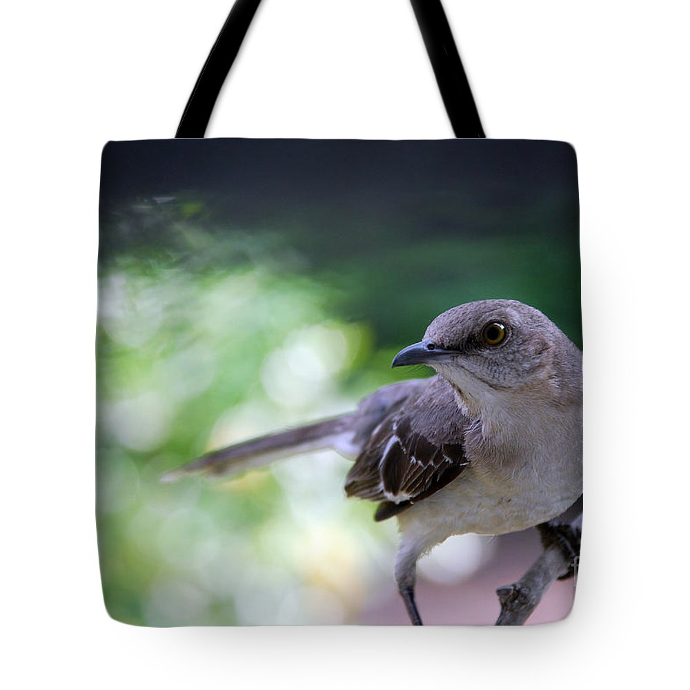 Names Of Birds Tote Bag featuring the photograph Mocking You by Skip Willits