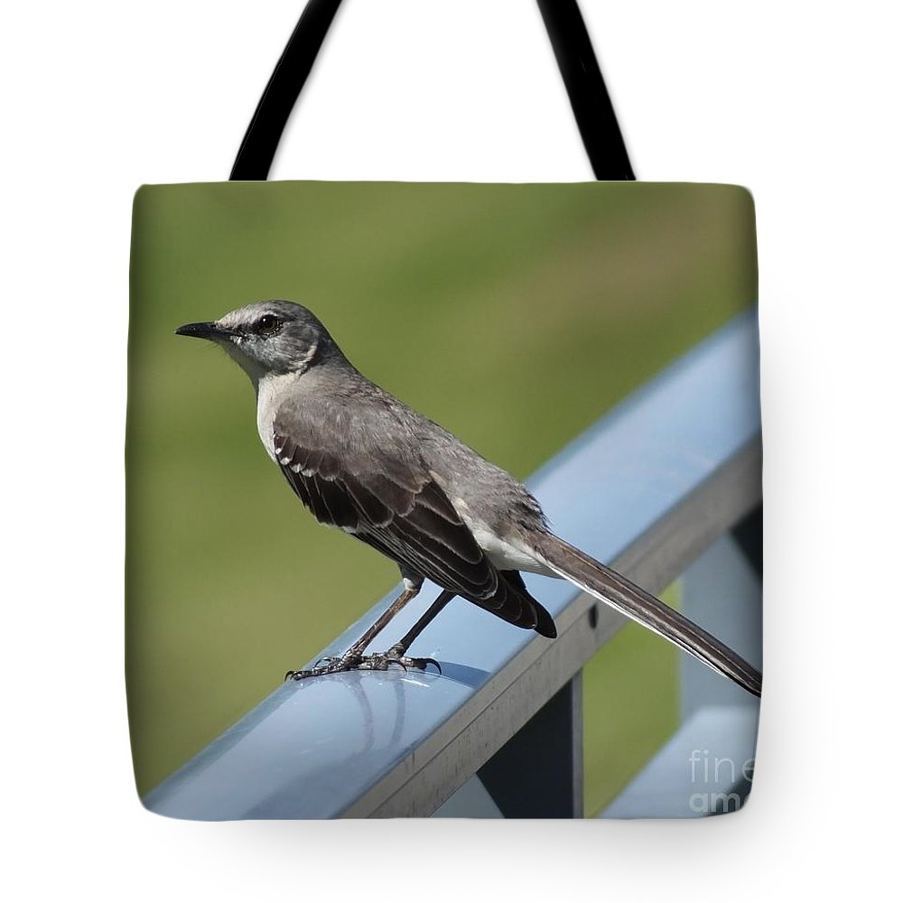 Bird Tote Bag featuring the photograph Mockingbird Perched by Lizi Beard-Ward