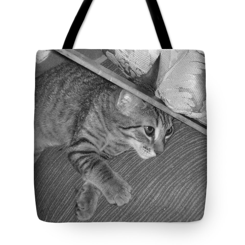 Kitten Tote Bag featuring the photograph Model Kitten by Pharris Art