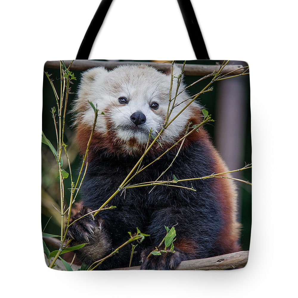 Red Panda Tote Bag featuring the photograph Mohu The Teenage Red Panda by Greg Nyquist