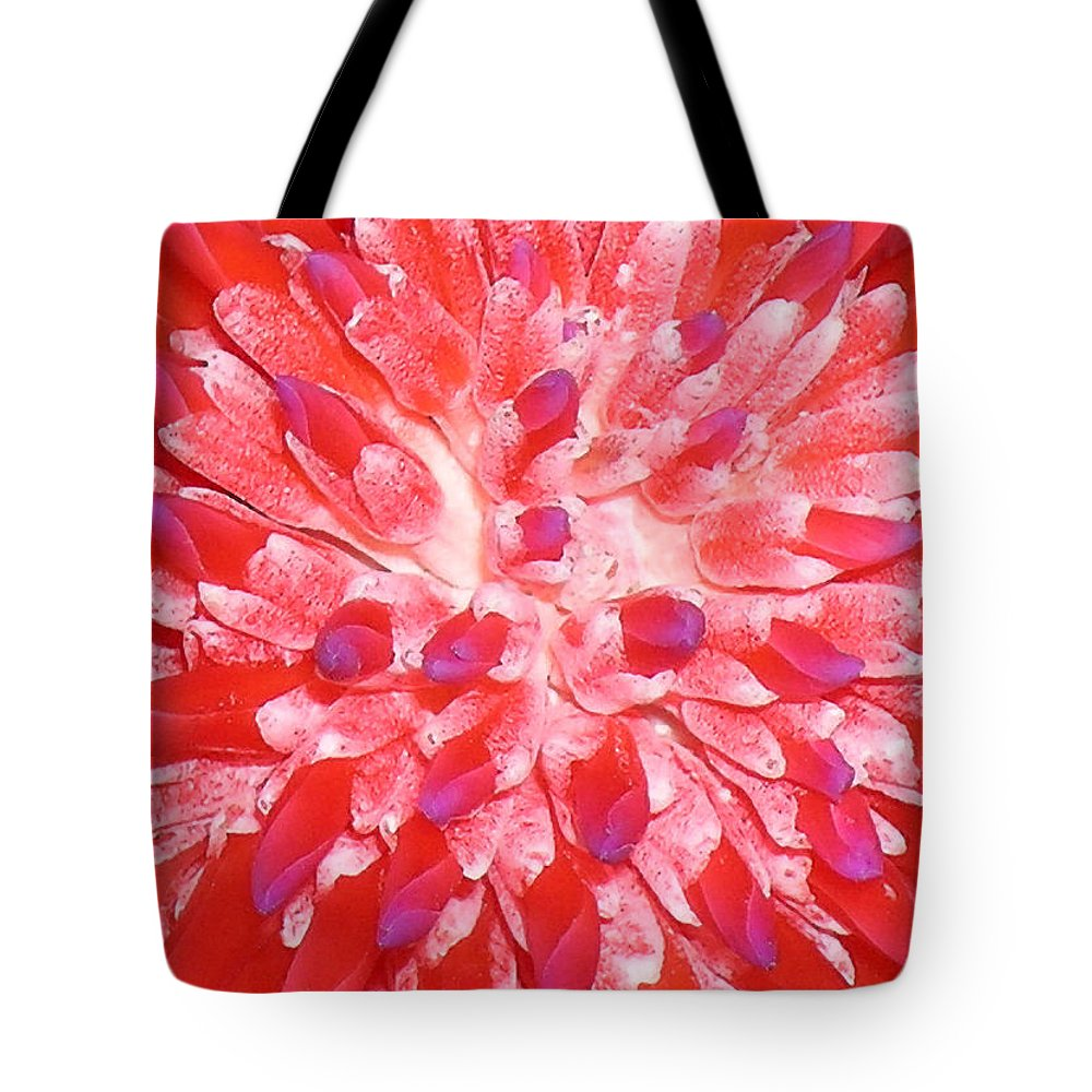 Hawaii Iphone Cases Tote Bag featuring the photograph Molokai Bromeliad by James Temple
