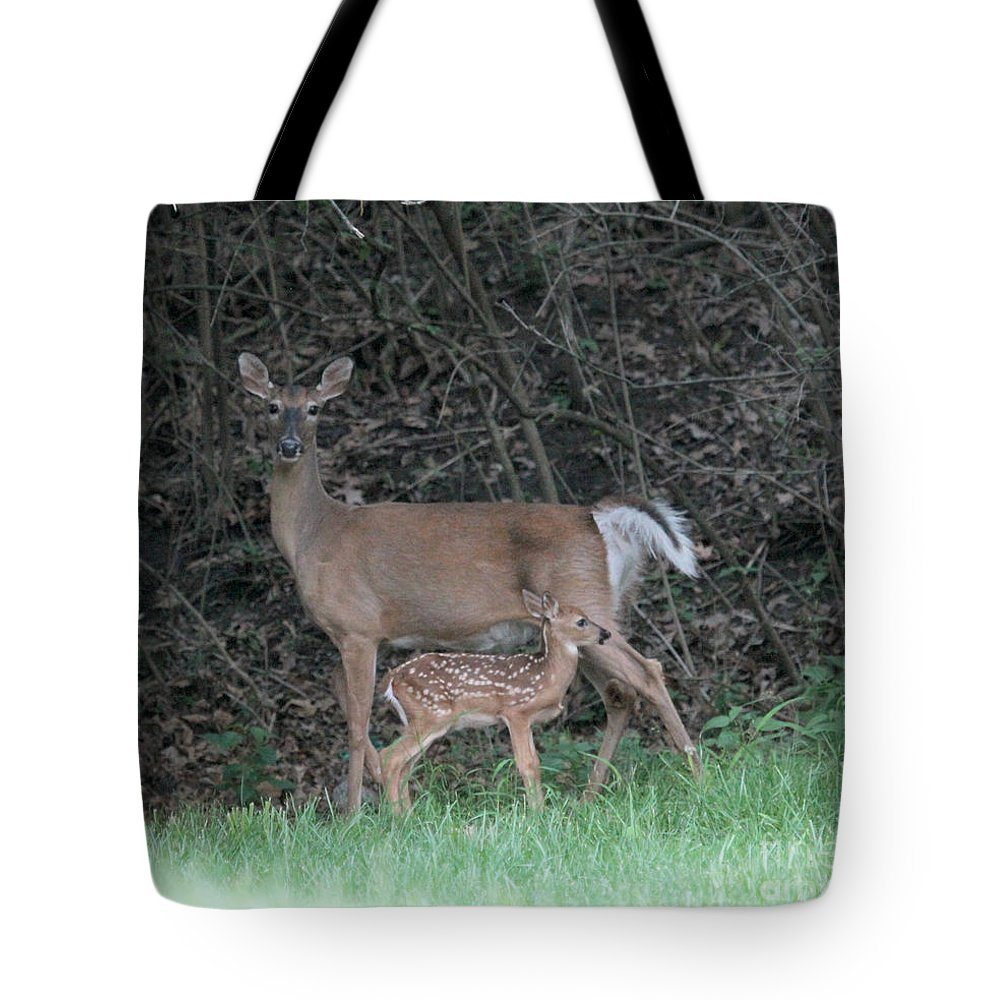Mom Tote Bag featuring the photograph Mom And Baby Deer by Dwight Cook