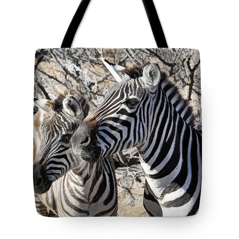 Designs Similar to Mom And Filly-  Zebras