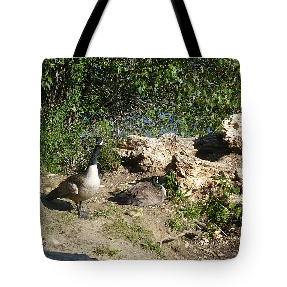 Canada Tote Bag featuring the photograph Mom Dad And Goslings by Nicki Bennett