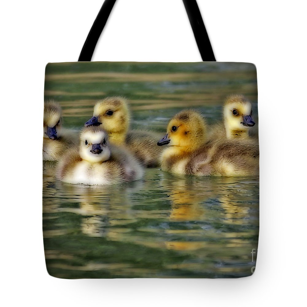 Baby Ducks Tote Bag featuring the photograph Momma's Little Gooslings by Elizabeth Winter