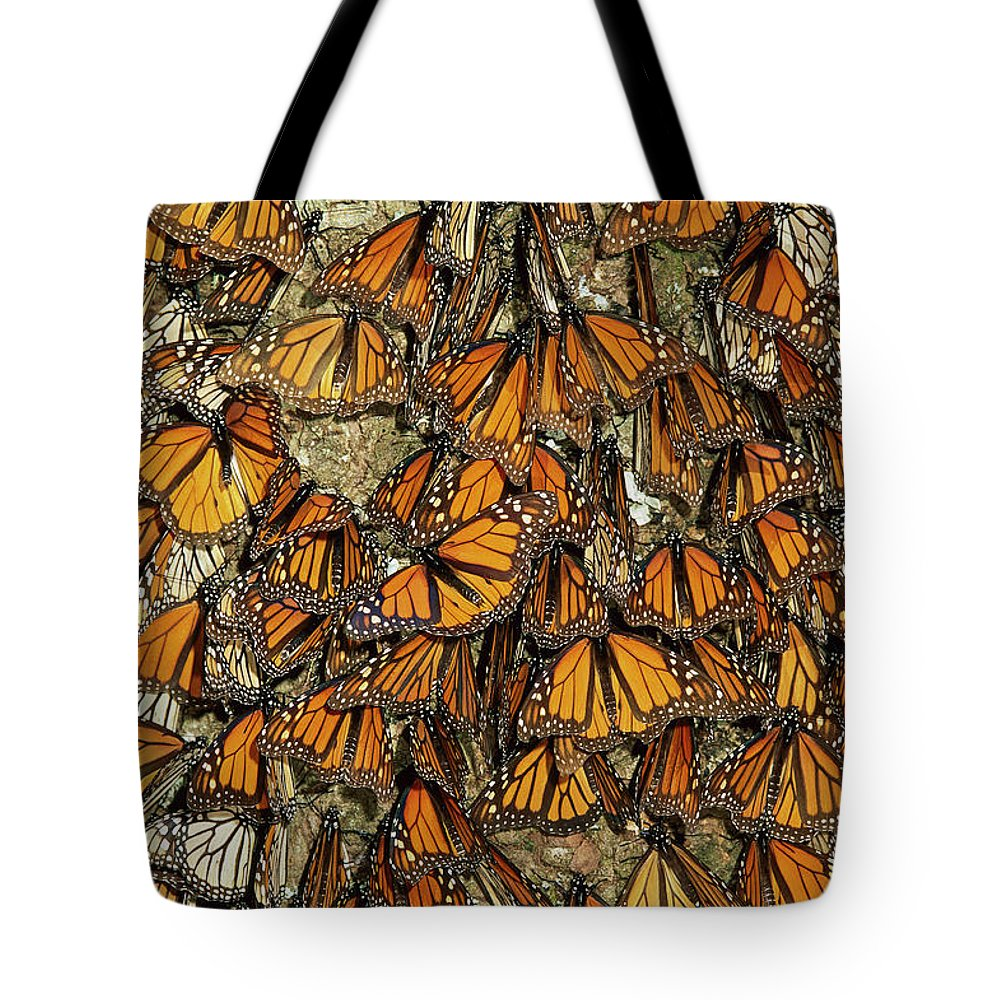 00785442 Tote Bag featuring the photograph Monarch Butterflies Wintering by Thomas Marent