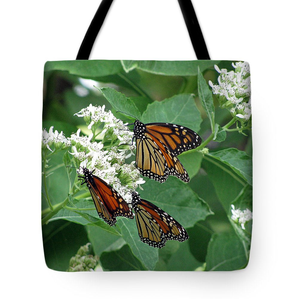 Butterfly Tote Bag featuring the photograph Monarch Butterfly 63 by Pamela Critchlow