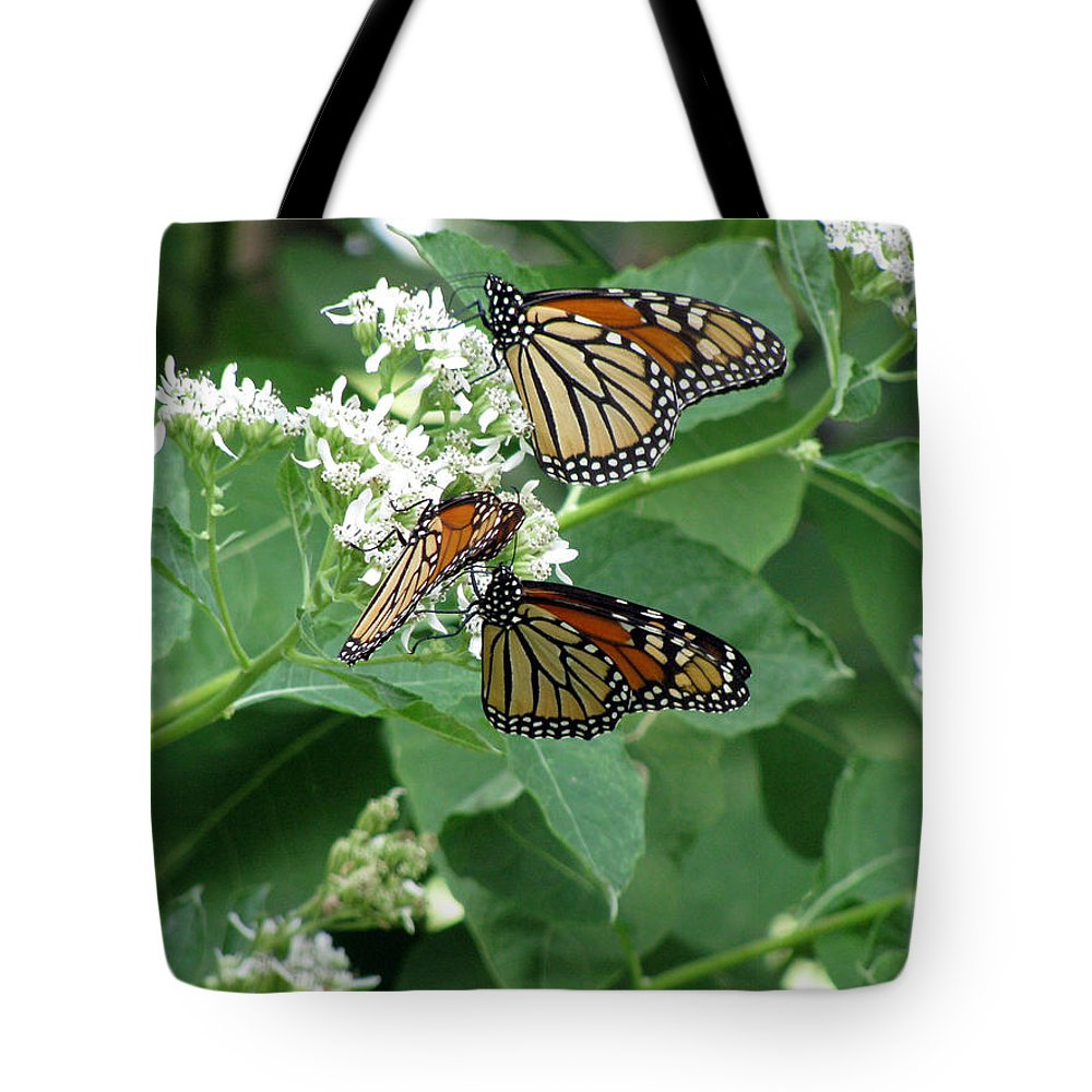 Butterfly Tote Bag featuring the photograph Monarch Butterfly 66 by Pamela Critchlow