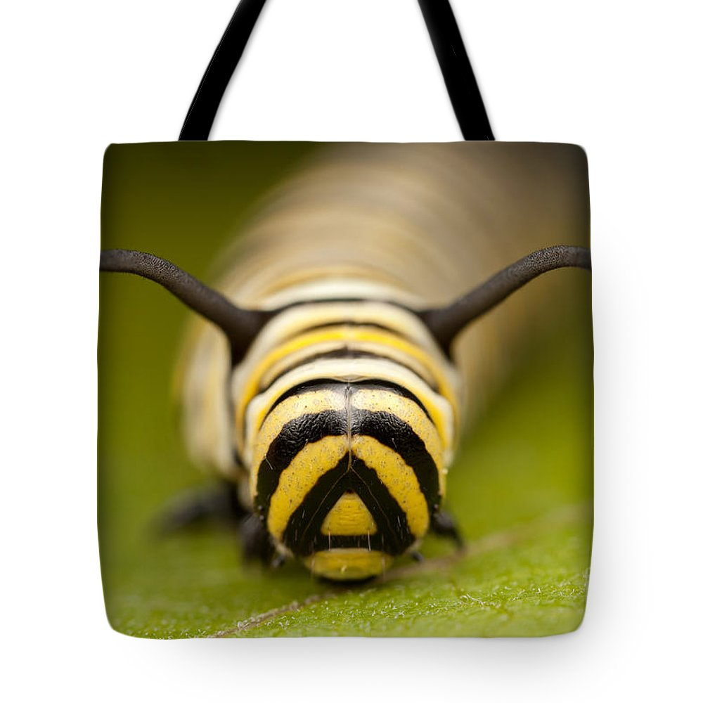 Clarence Holmes Tote Bag featuring the photograph Monarch Butterfly Caterpillar I by Clarence Holmes