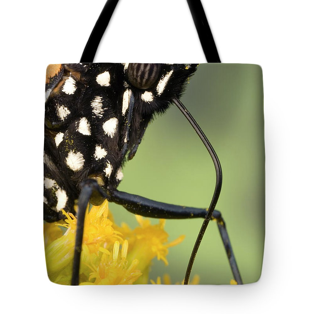 Butterfly Tote Bag featuring the photograph Monarch Butterfly Male Feeding by Ingo Arndt
