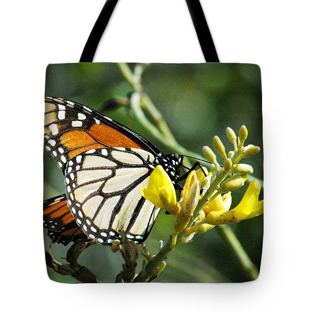 Monarch Tote Bag featuring the photograph Monarch Feeding by Norman Johnson