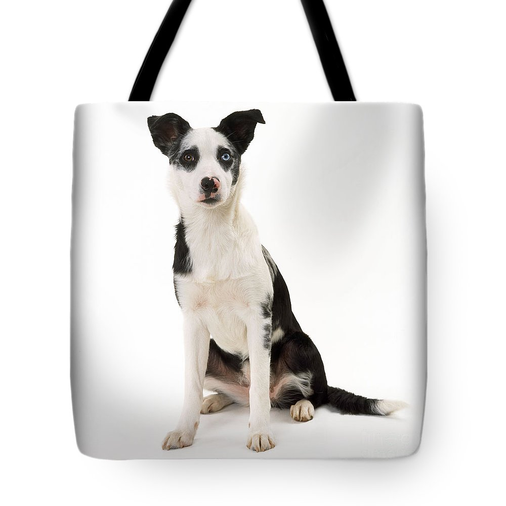 Mongrel Tote Bag featuring the photograph Mongrel Dog, Border Collie Cross by John Daniels