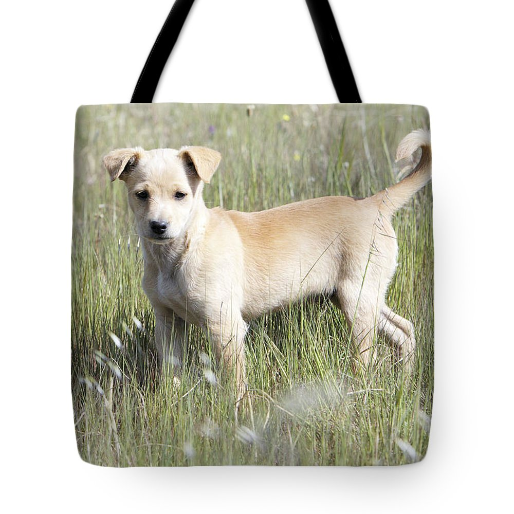 Mongrel Tote Bag featuring the photograph Mongrel Dog Puppy by Duncan Usher