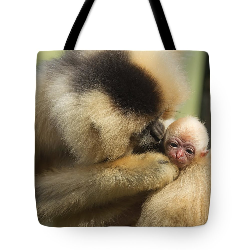 Motherhood Tote Bag featuring the photograph Monkey Mother by Jaroslav Frank