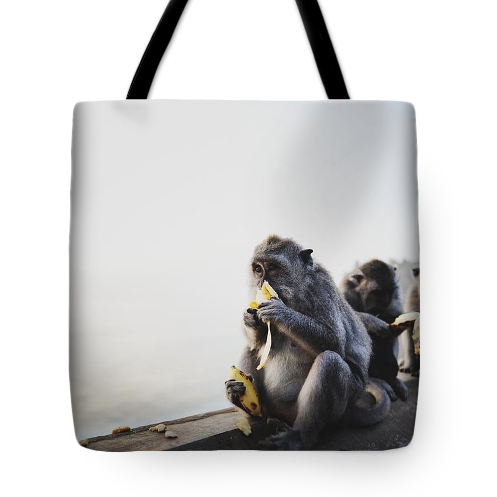 In A Row Tote Bag featuring the photograph Monkeys Eating Bananas by Carlina Teteris