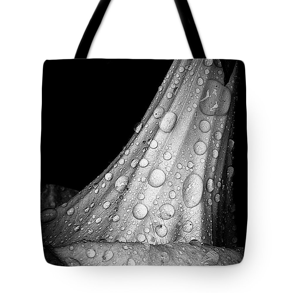 Earthy Tote Bag featuring the photograph Moonflower And Rainwater by Chris Berry