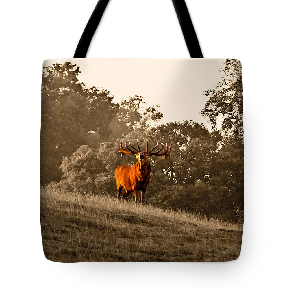Red Deer Tote Bag featuring the photograph Morning Call by Scott Carruthers