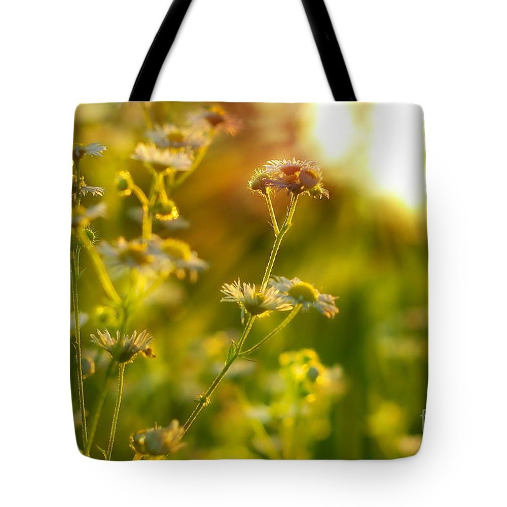 Grass Tote Bag featuring the photograph Morning Chamomiles by Dariusz Gudowicz