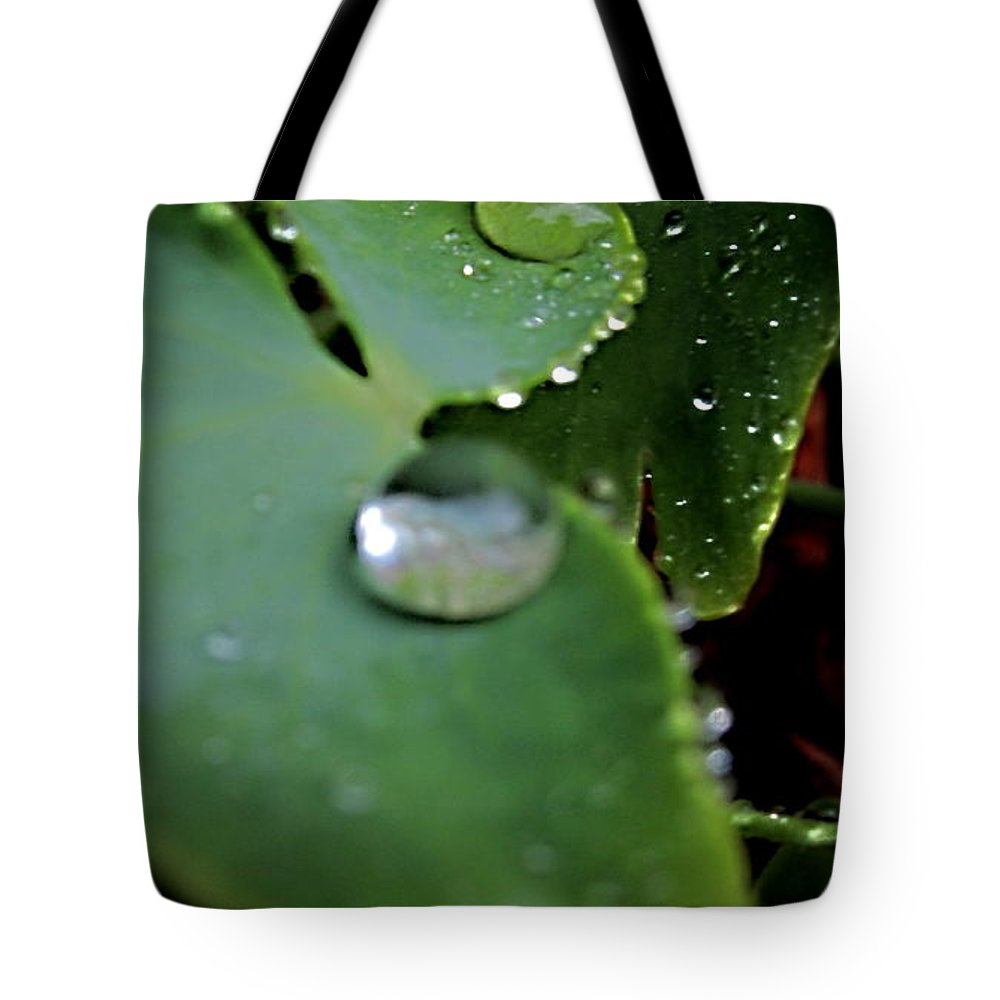 Artiste Danielle Parent Tote Bag featuring the photograph Morning Fresh Leaves With Droplets by Danielle Parent