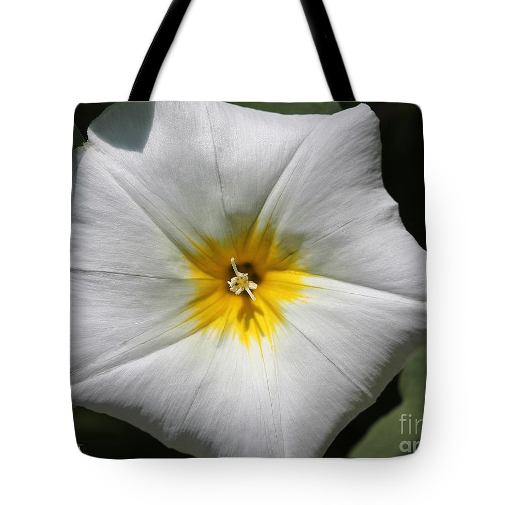 Mccombie Tote Bag featuring the photograph Morning Glory Named White Ensign by J McCombie