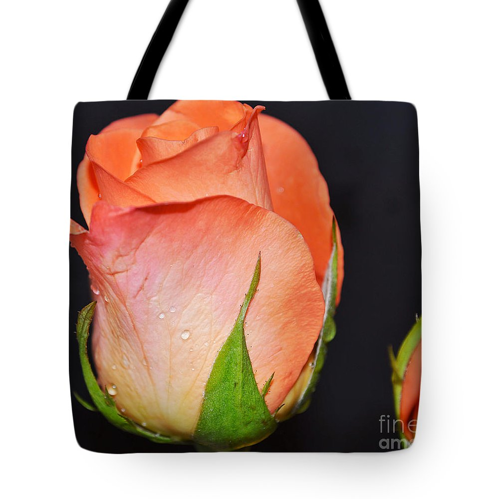 Rose Tote Bag featuring the photograph Morning Glow by Felicia Tica