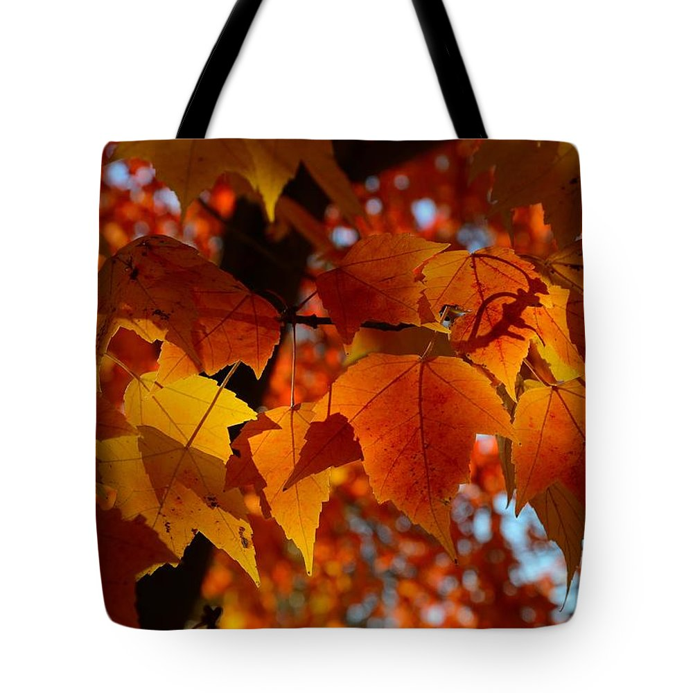 Sunset Maple Tote Bag featuring the photograph Morning Light by Charles Owens