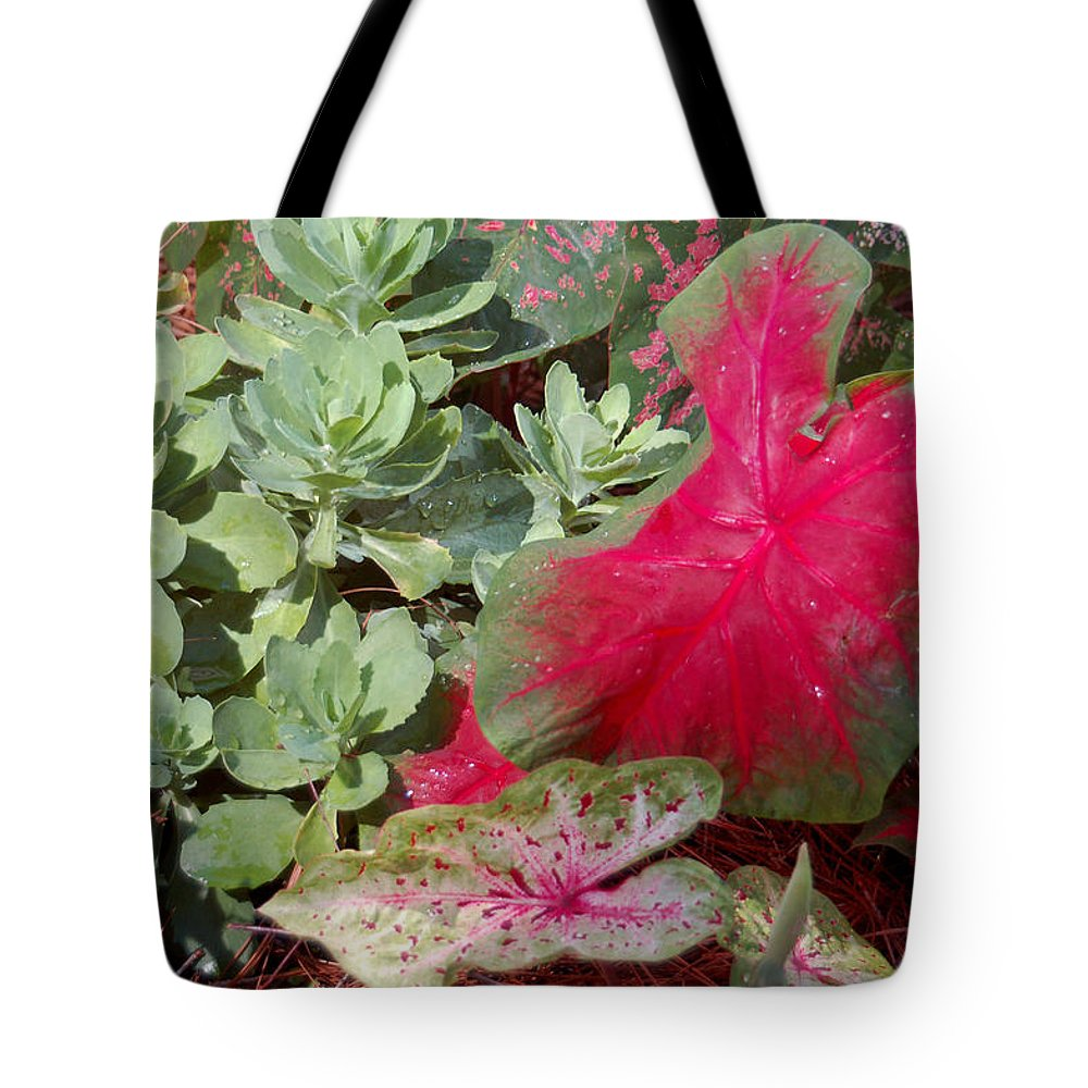Caladium Tote Bag featuring the photograph Morning Rain by Suzanne Gaff